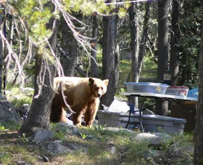 Half of the Tuolumne Meadows ... & Tuolumne Meadows Campground Yosemite | Camping Idea
